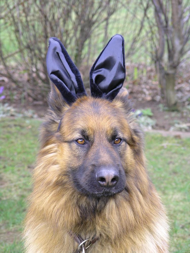 Osterhase mit vier Ohren.