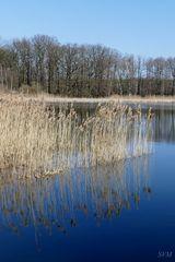 Ostermontag 2016 in der Oberlausitzer Heide- und Teichlandschaft