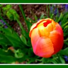 Ostern (Auferstehungssonne)  - Happy Easter/ Feliz Pascua