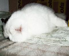 Ostern verpennt!