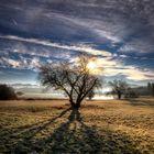 Osterseen - Bäume im Gegenlicht (HDR)