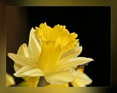 Ostersonntagsblümchen
