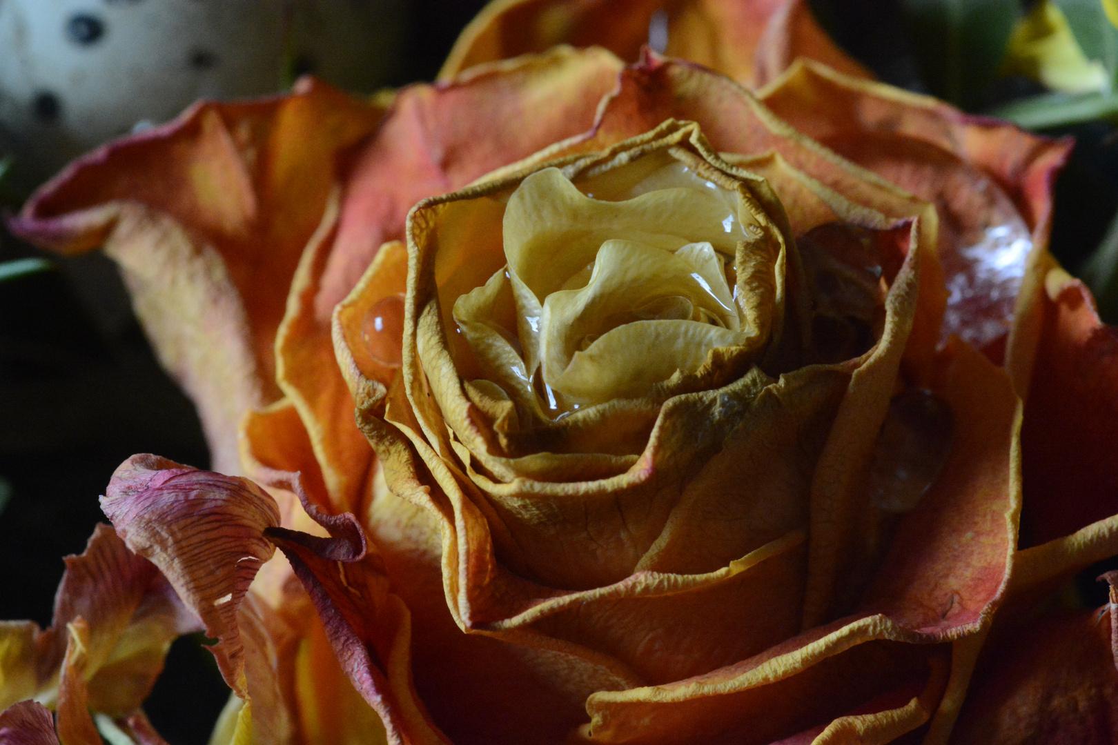 Osterstrauß mit Rose