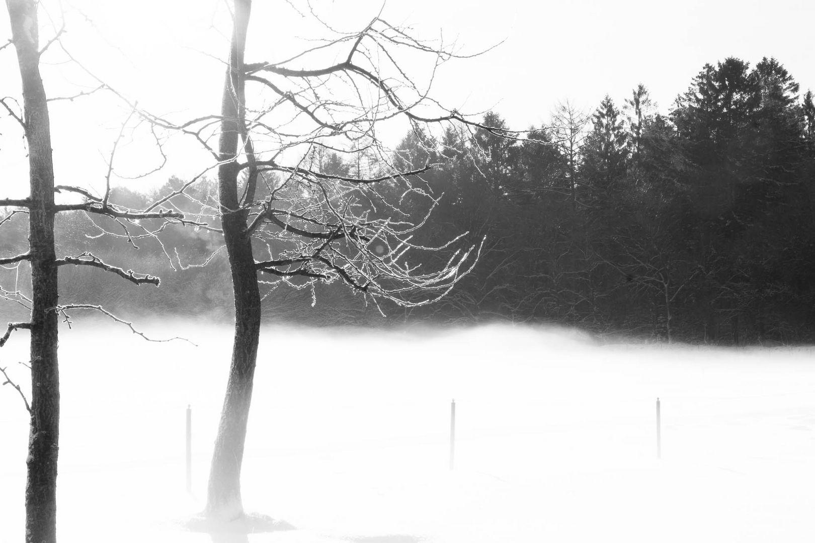 Ostfriesischer Wintermorgennebel