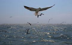 Ostfrieslands Küste, hier vor Langeoog