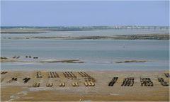 Ostréiculture dans le bassin de Marennes-Oléron