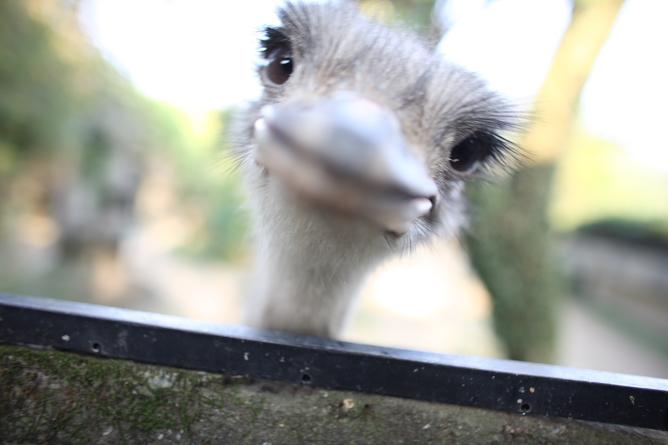 ostrich's smile