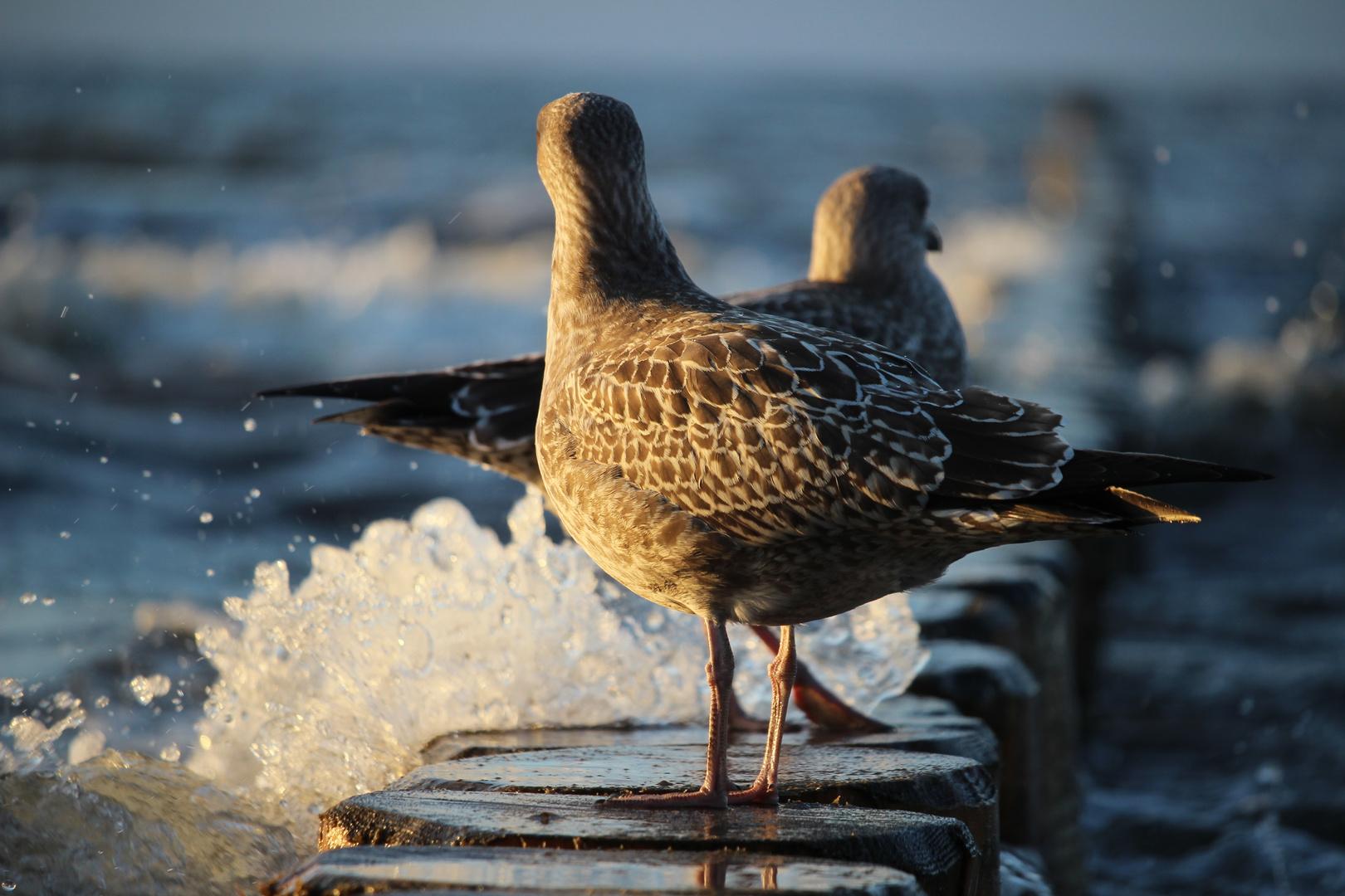 Ostsee Leben
