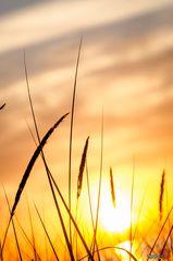 Ostsee Zingst Sonnenuntergang