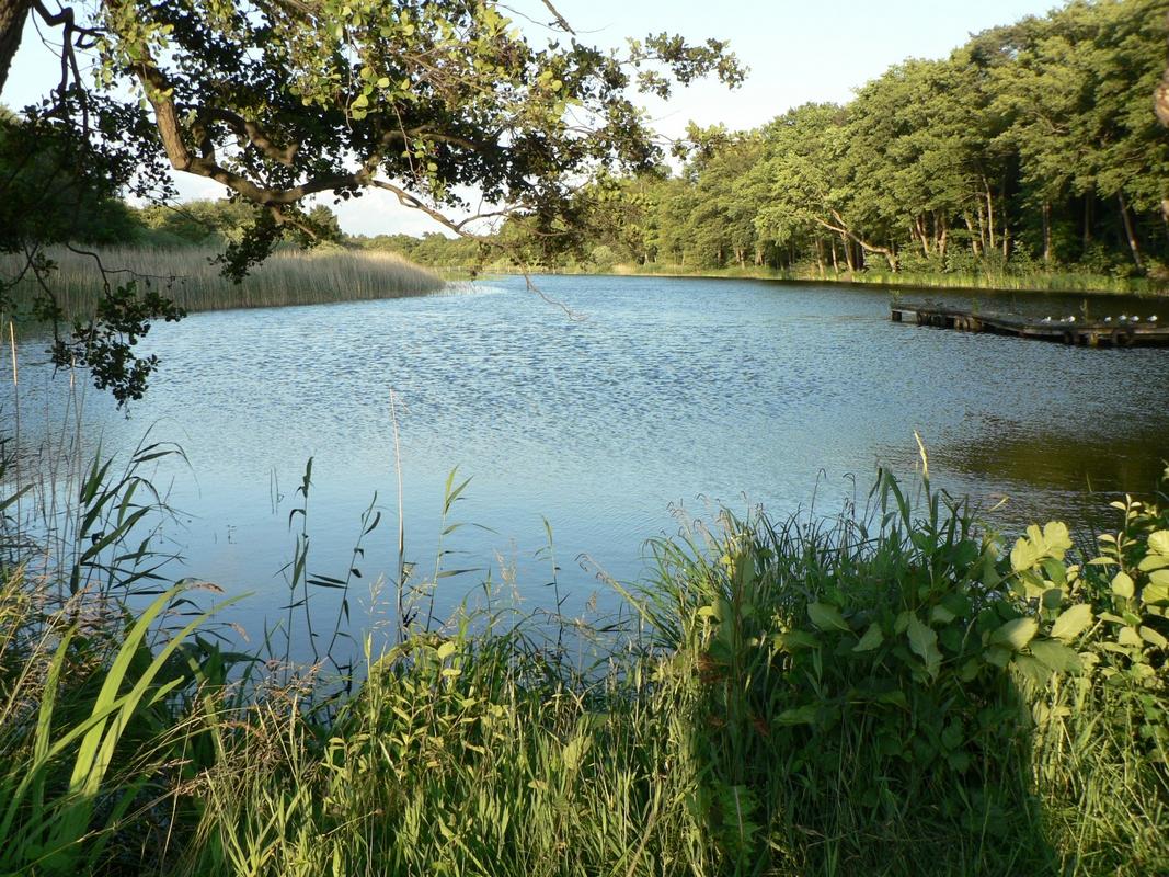 Ostseebad Prerow Boddenlandschaft
