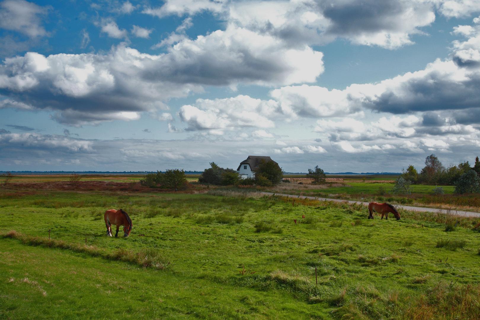 Ostseeinsel Hiddensee