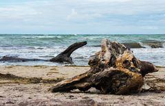 Ostseestrand bei Ahrenshoop 2