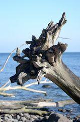 Ostseetraum der Baum