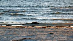 Ostvorpommersche Strandratte