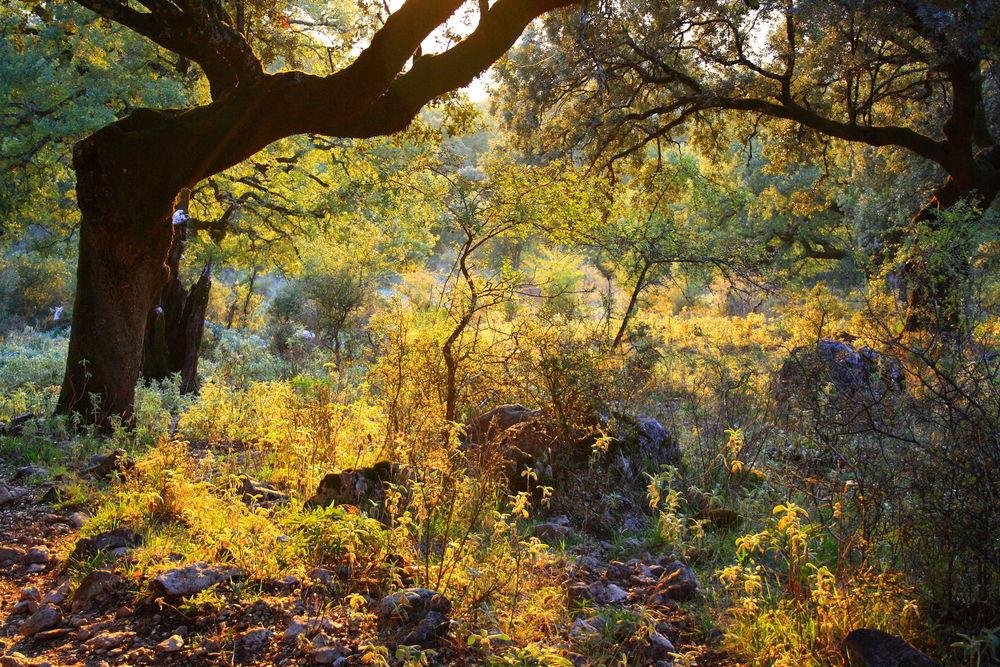 otoño en grazalema