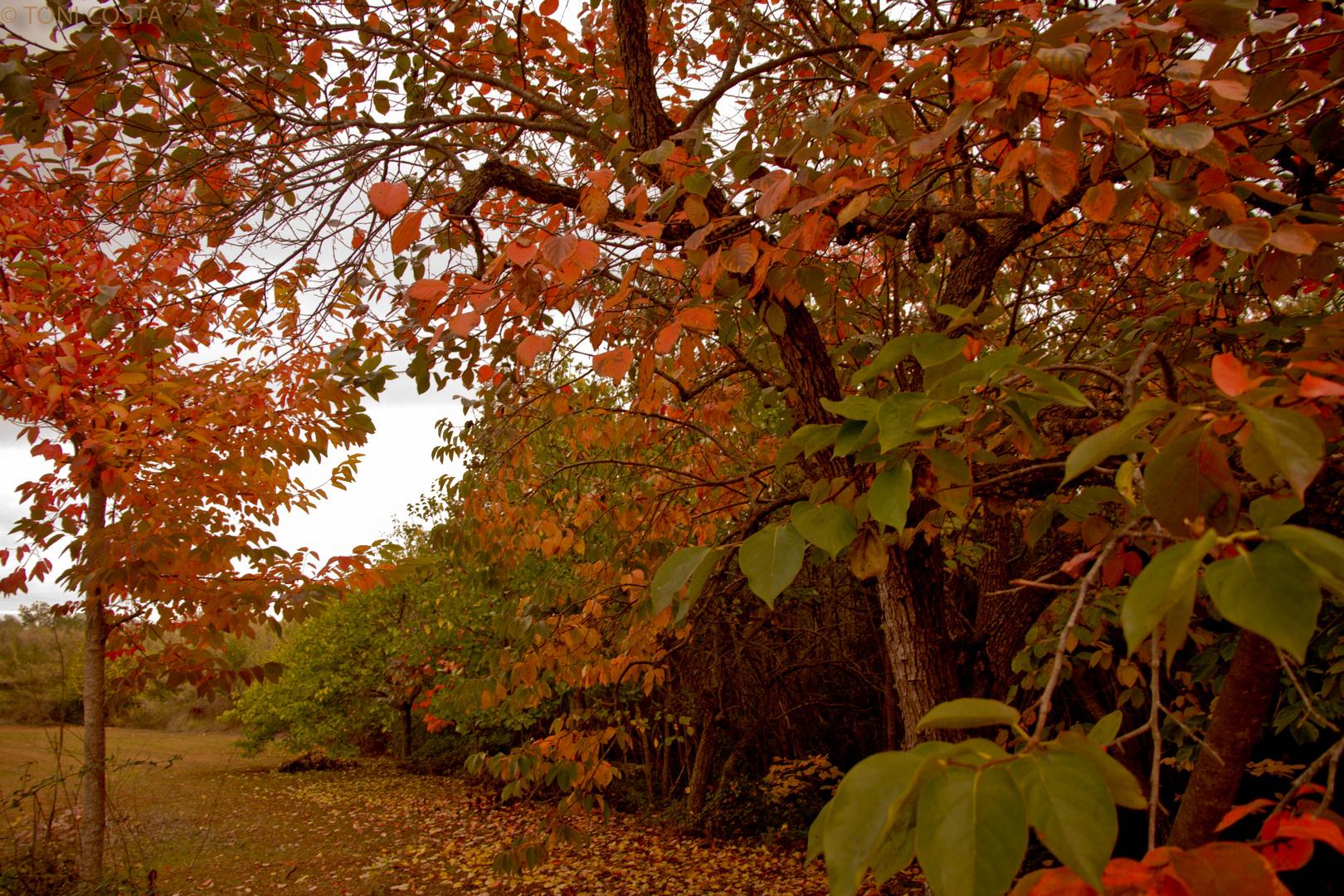 otoño en ibiza