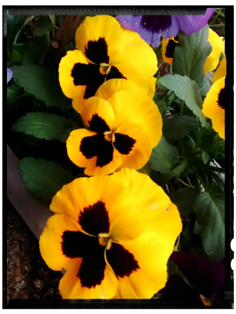 Otoño florido