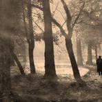 Otoño:el parque en la bruma