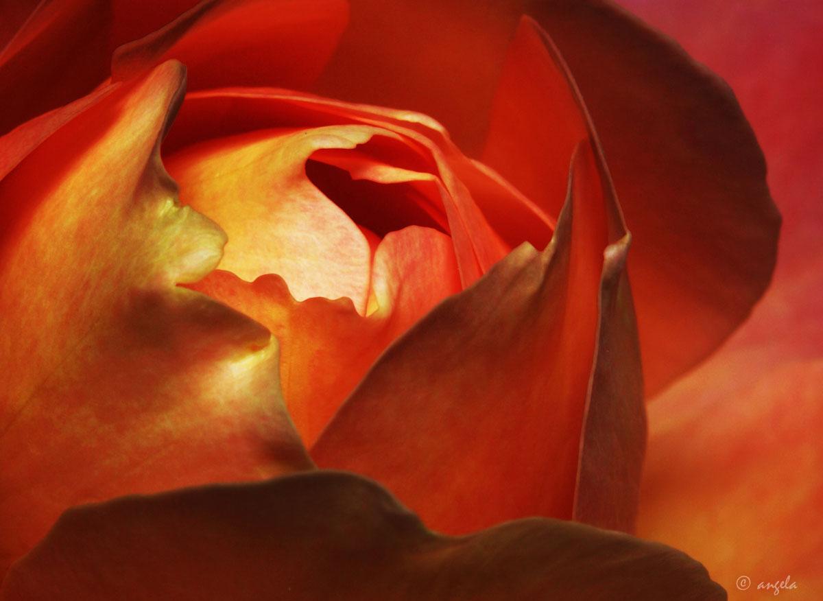 Otro corazón de rosa