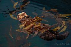 Otter beim Mittagsschlaf im Oceanario de Lisboa