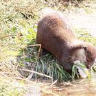 Otterfütterung immer toll