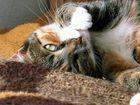 our cat: Mozes