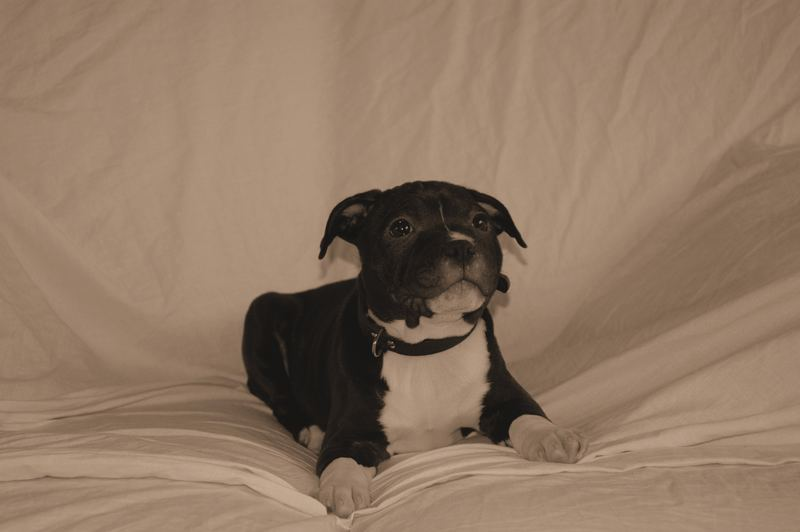 Our Dog in a photoshoot