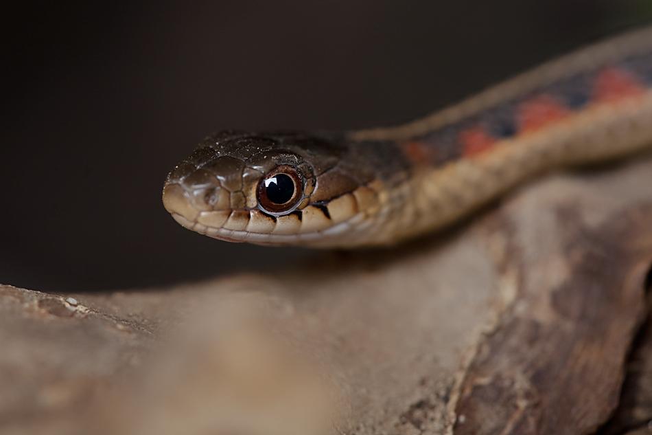Our little snake