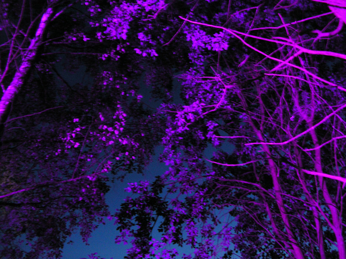 our purple forest