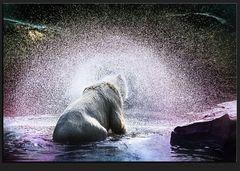 ours polaire à la lumière