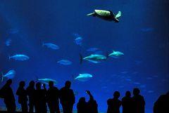 Outer Bay Aquarium