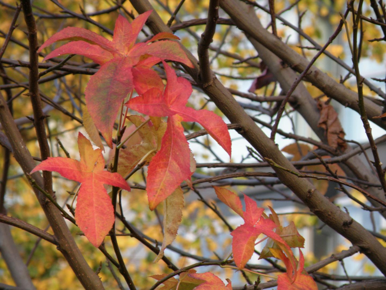 Outoño!!!!