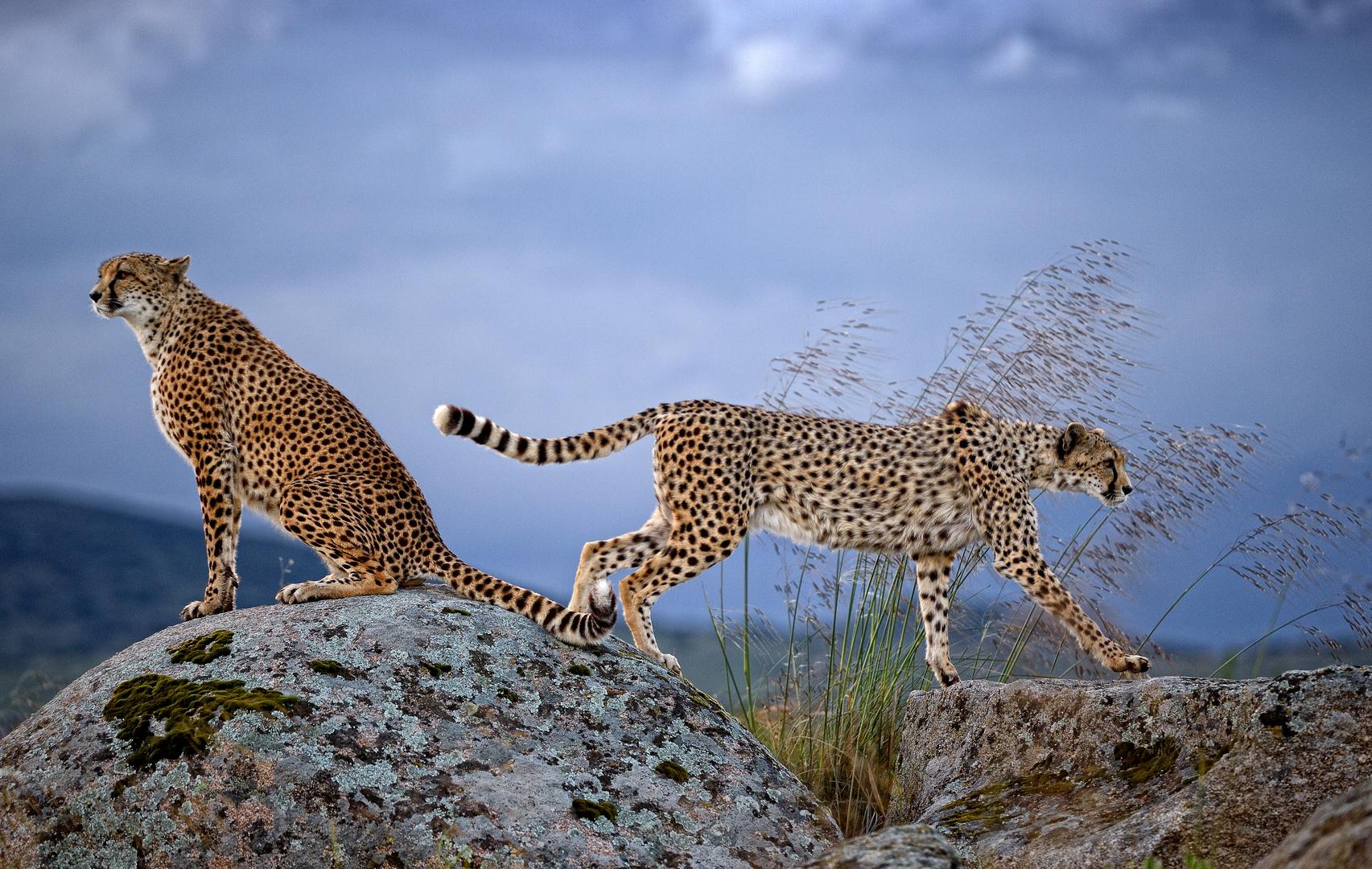 Outside Africa