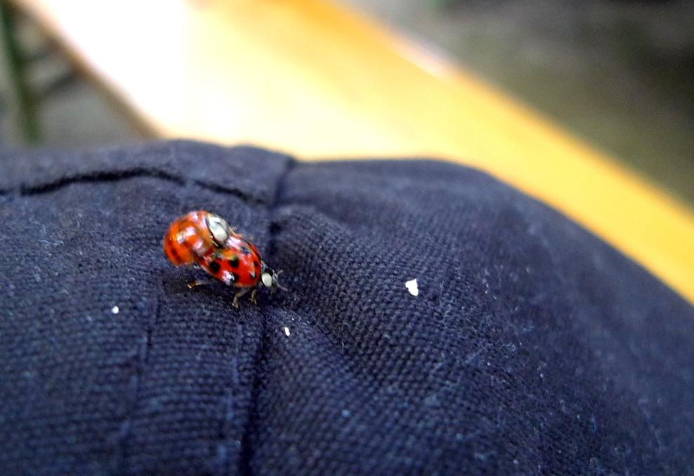 Ouwch bey Insektnmakros ist ouwph den richtigng Eynsazz der Beweegunxunshäaphe zu 8en!