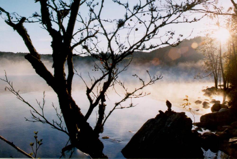 Owl - a foggy morning