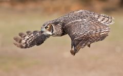 owl air