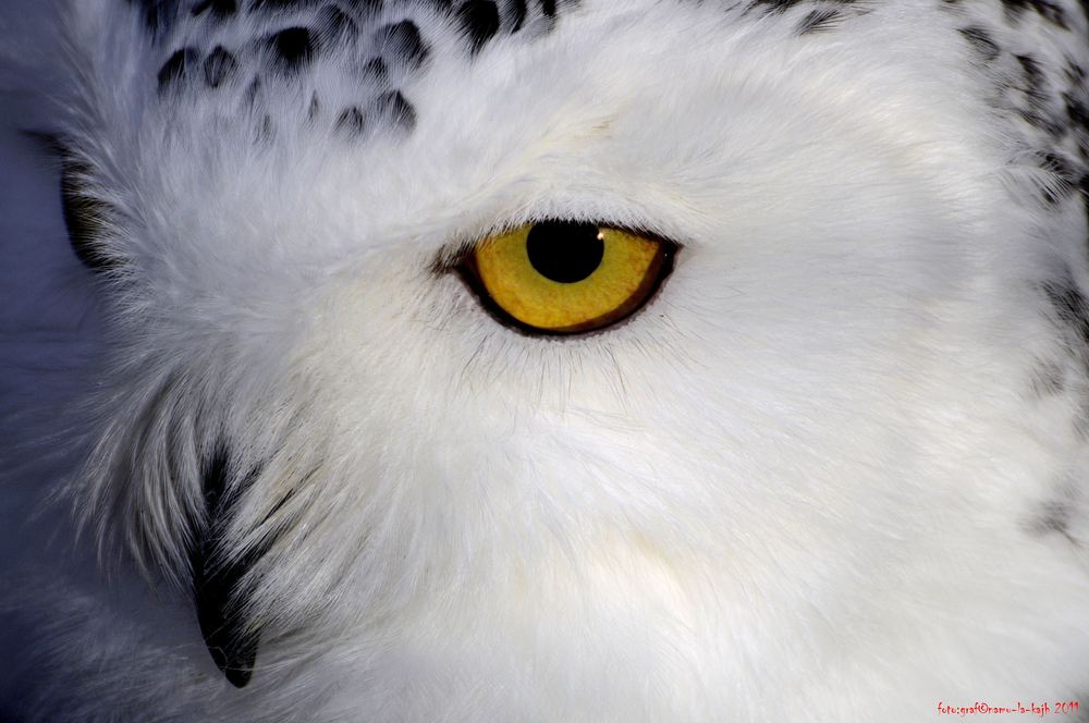 owl-eye, Aufgenommen im Wildpark Schweinfurt
