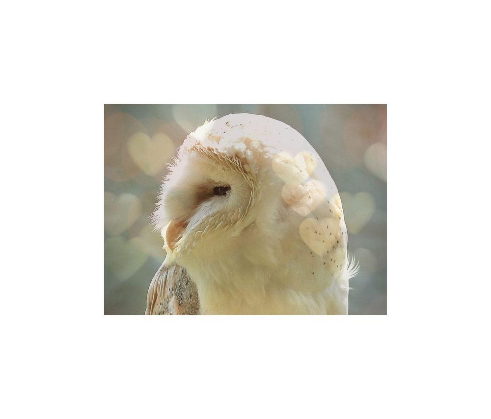 oWl */* in lOvE