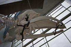 Ozeaneum - Stralsund 2008 - 15