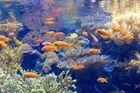 Ozeanium Lissabon Unterwasserszene 3