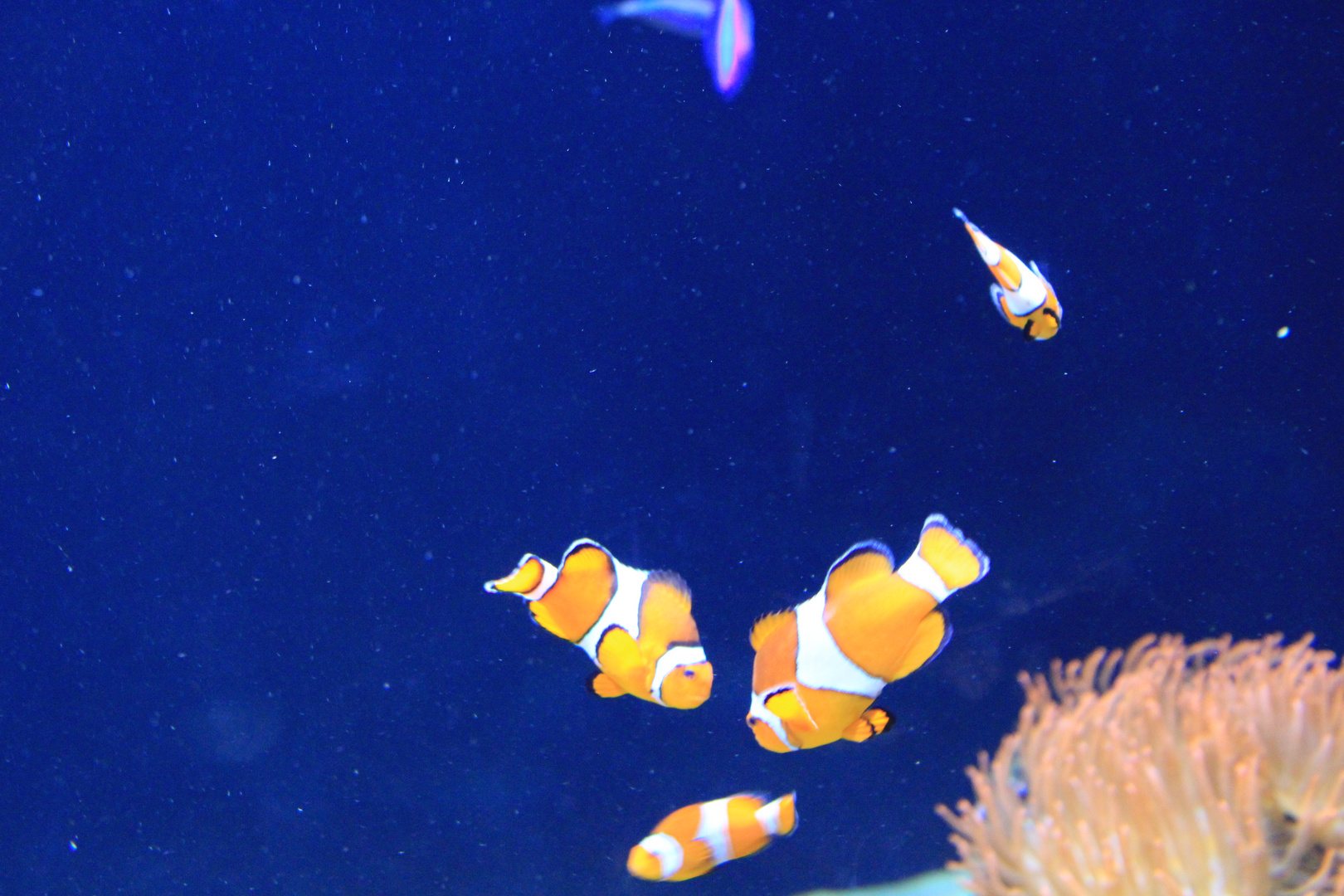 Ozeanium Lissabon Unterwasserszene 5