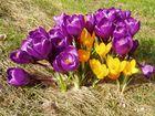 P 12-...der Frühling ist da! (1Woche später)