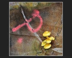 P wie Pilze