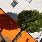 P20 Baum Schatten P20-19col +6Vergleichsfotos