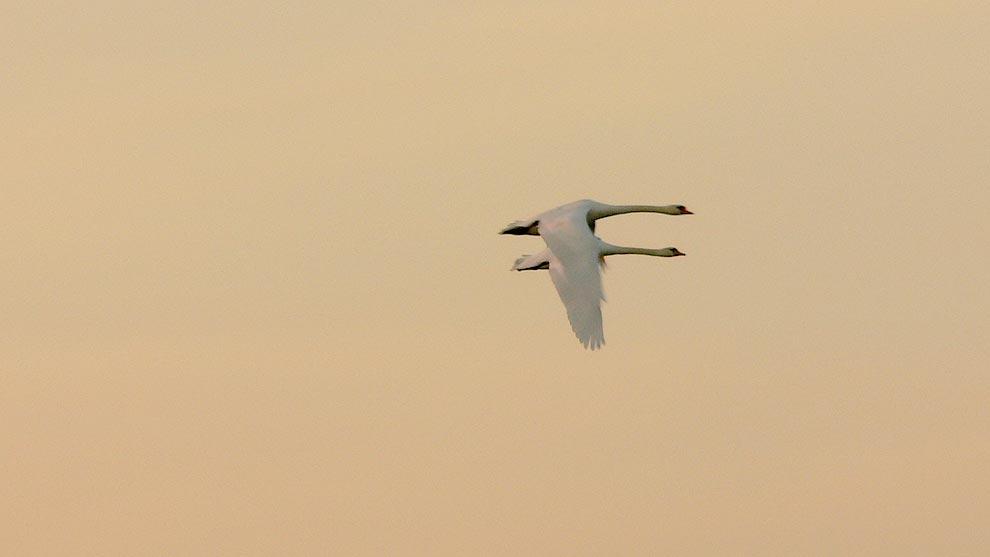 Paarflug am Morgen
