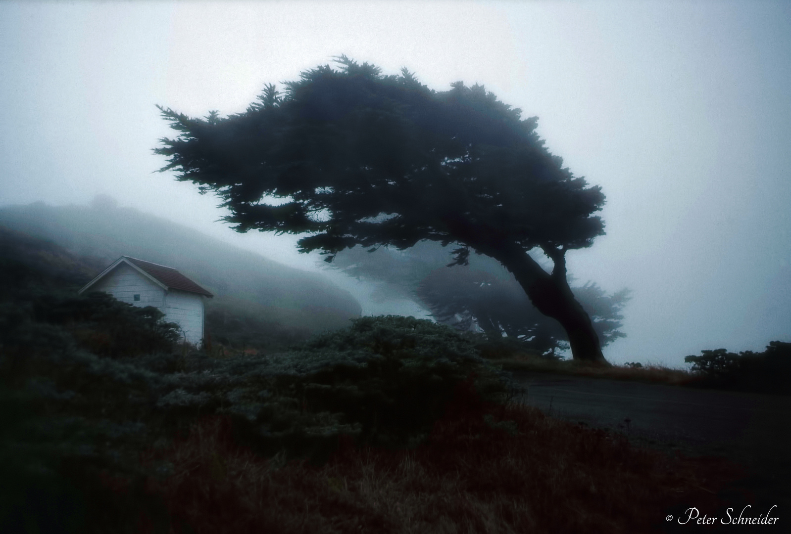Pacific fog.