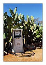 pack den kaktus in den tank!
