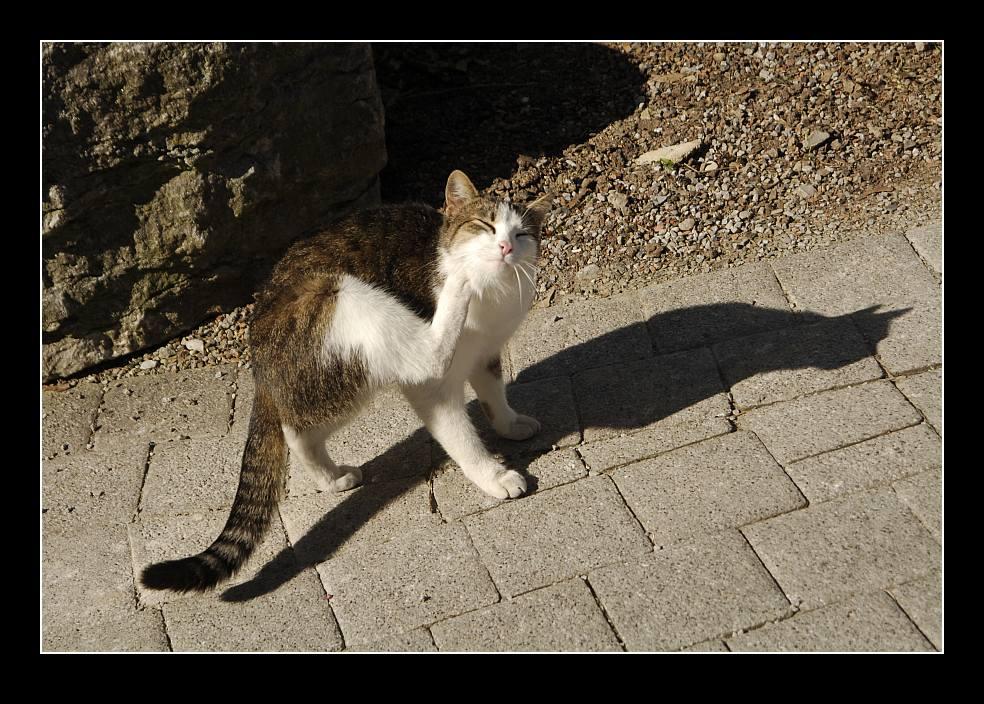 Paco und sein Schatten