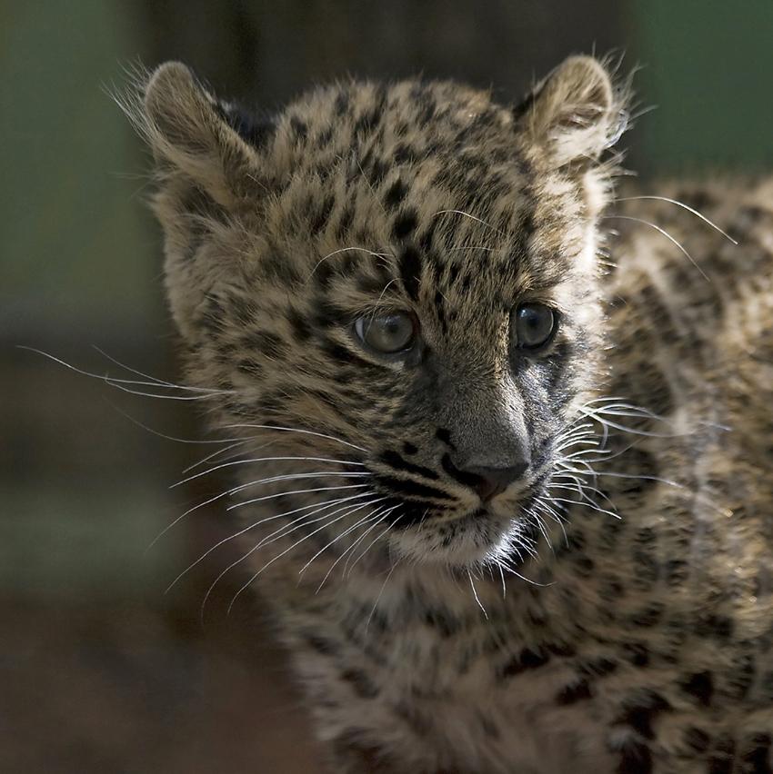 Pädi - everyone's darling in Toni's Zoo