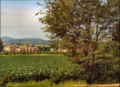Paesaggio d`Umbria